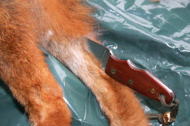 Ar šo nazīti diezgan viegli atgriezt ādu no lapsas kājām.