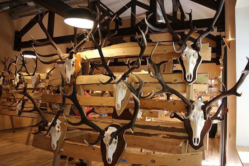 Ar LMS atbalstu notika divas medību trofeju izstādes Skrundā un Ērgļos.