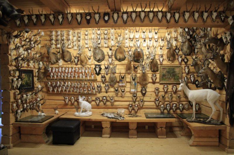 Jau divdesmit vienu gadu Ērgļu novadā esošais Viesaku medību muzejs apmeklētājus priecē ar plašu izbāžņu, ragu, ilkņu un citu medību trofeju klāstu.