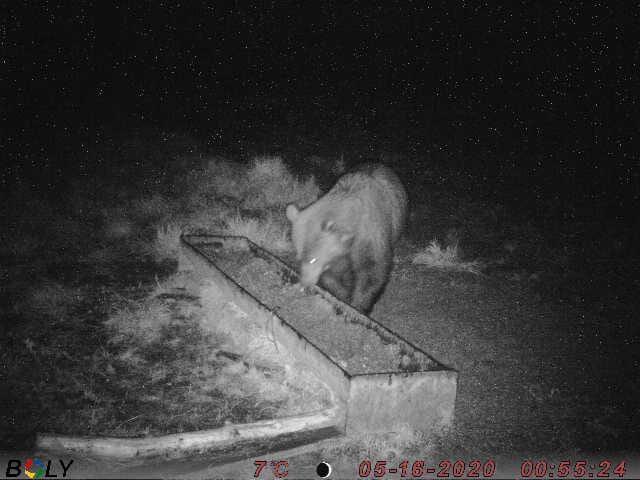 Lāči jau salauzuši sešas mucas, kur dozēti tiek padota barība meža dzīvniekiem. Tādēļ tagad uzstādīta sile.