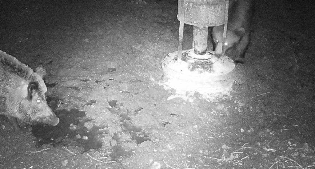 Spriežot pēc pārējām fotogrāfijām, ruksis, protams, aizbēga un lācis palika vienatnē pētīt barotavas saturu.