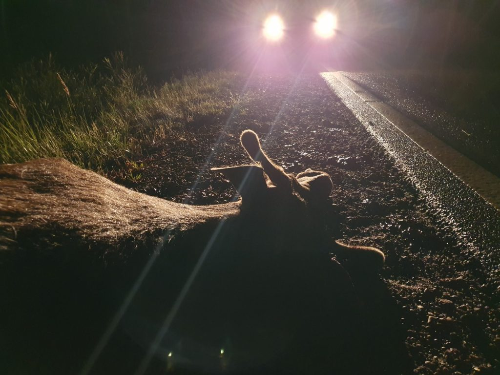 Braucot diennakts tumšajā laikā, jābūt īpaši uzmanīgiem!