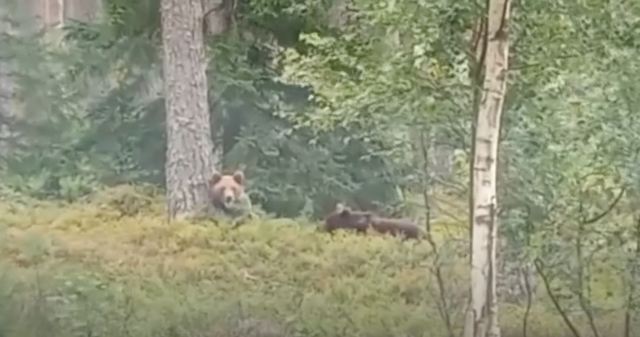 Lāči, kas vairākkārt manīti Valkas apkārtnē